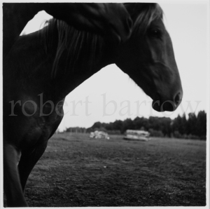Untitled - Swan River MB 1984