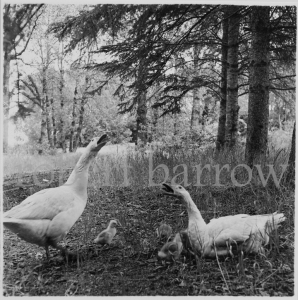 Untitled - Swan River MB 1981