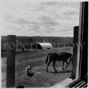 View from kitchen window - Swan River MB 1983
